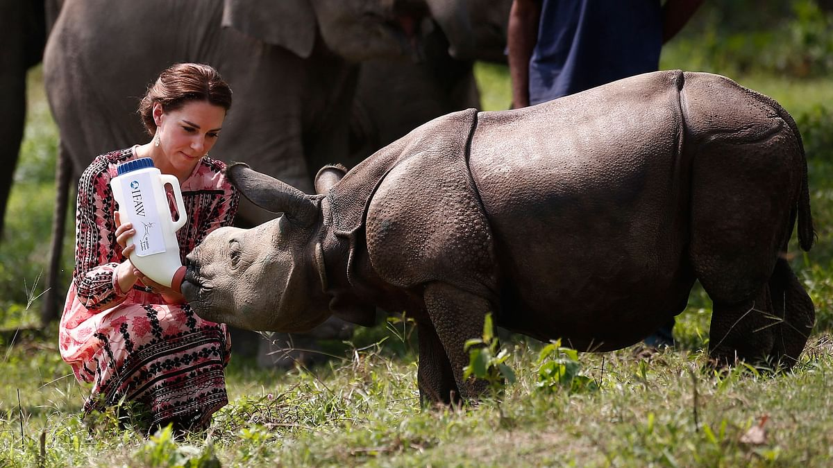 Britain's Kate, Duchess of Cambridge, feeds a baby rhino at the Centre for Wildlife Rehabilitation and Conservation (CWRC), at Panbari reserve forest in Kaziranga. (Photo: AP)