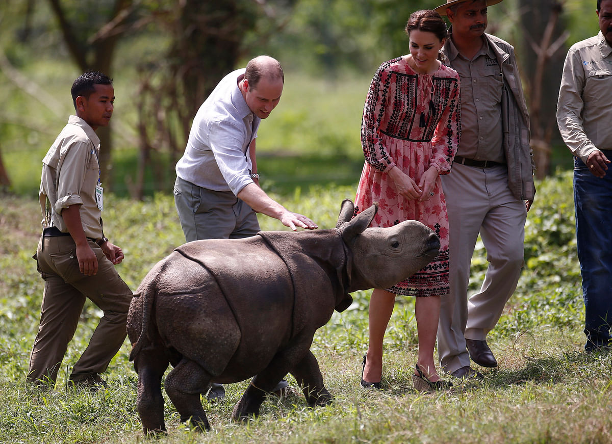 Britain's Prince William touches a baby rhino as his wife Kate, the Duchess of Cambridge watches at the Centre for Wildlife Rehabilitation and Conservation (CWRC), at Panbari reserve forest in Kaziranga. (Photo: AP)
