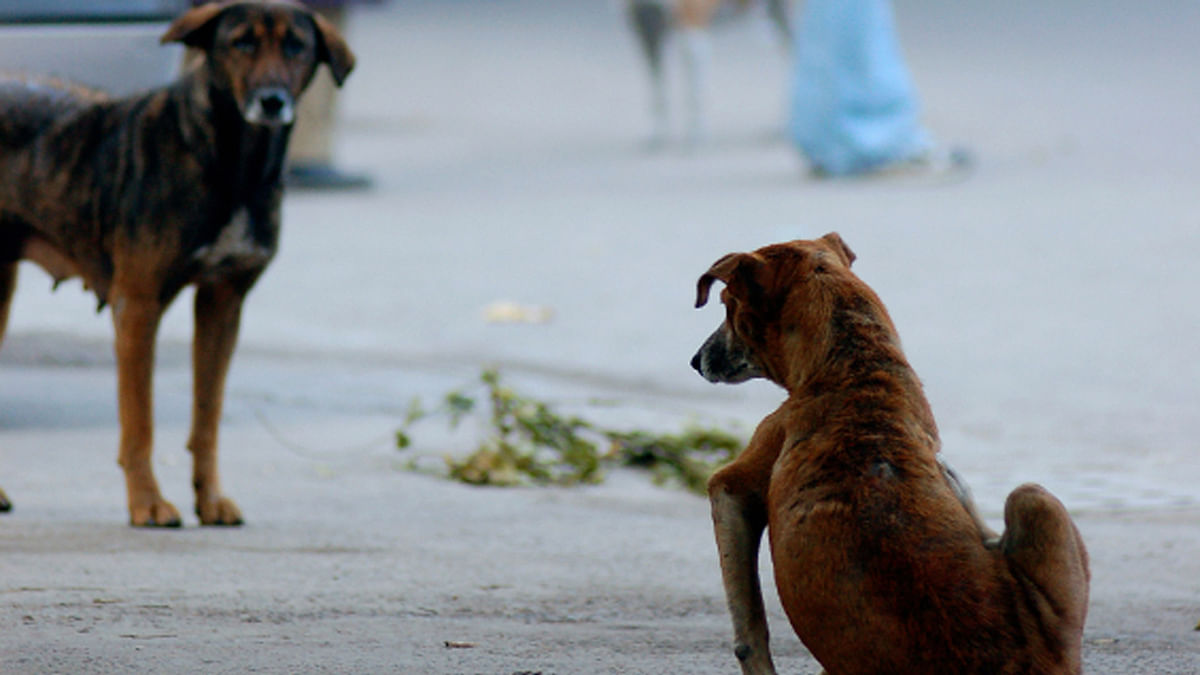 21 dogs and cats were allegedly poisoned in Pune. Image for representation only.