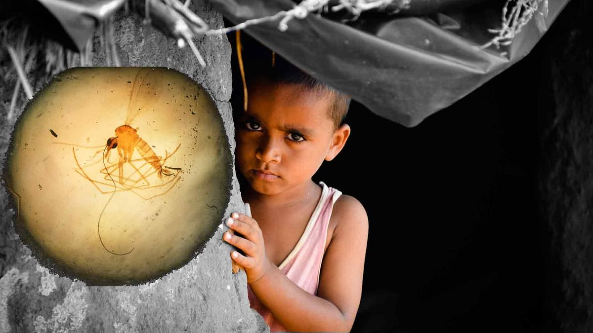 Why is there still no effective malaria vaccine after decades of research and several development efforts? (Photo: <b>The Quint</b>)