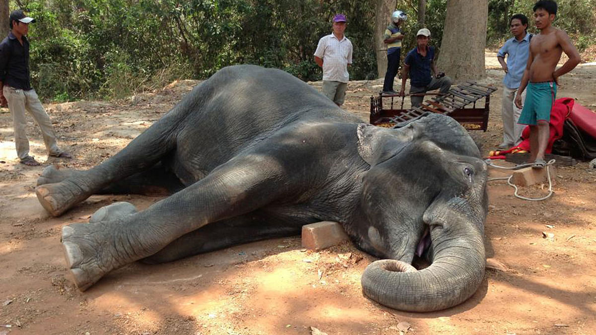 """Photos of a collapsed elephant called Sambo were shared thousands of times on Facebook. (Photo: facebook/<a href=""""https://www.facebook.com/brak.sarom"""">Yem Senok</a>)"""