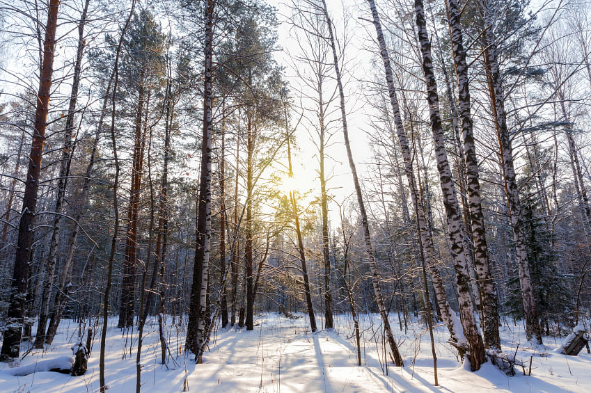 In winter, we can see bare trees and ground covered with sparse powdered sugar – like snow on a cake – to 24 inch whipped cream-like snow smothering the earth. (Representative Image; Photo: iStock)