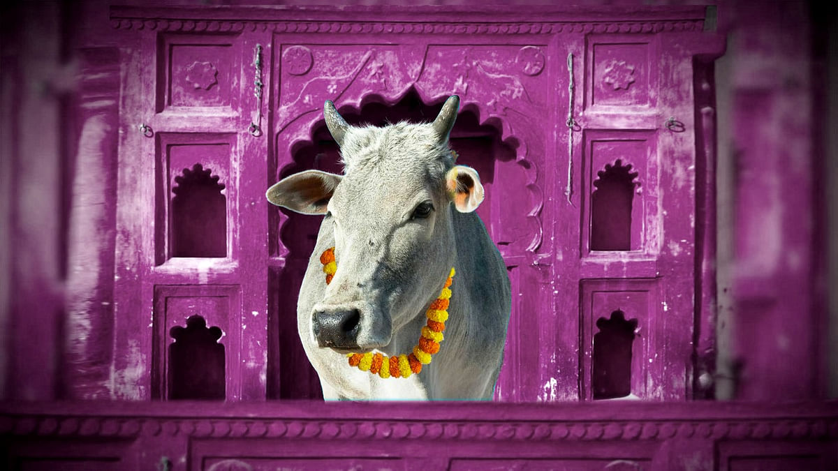 The Rajasthan government has introduced a chapter on the cow for class V students. (Photo: <b>The Quint</b>)