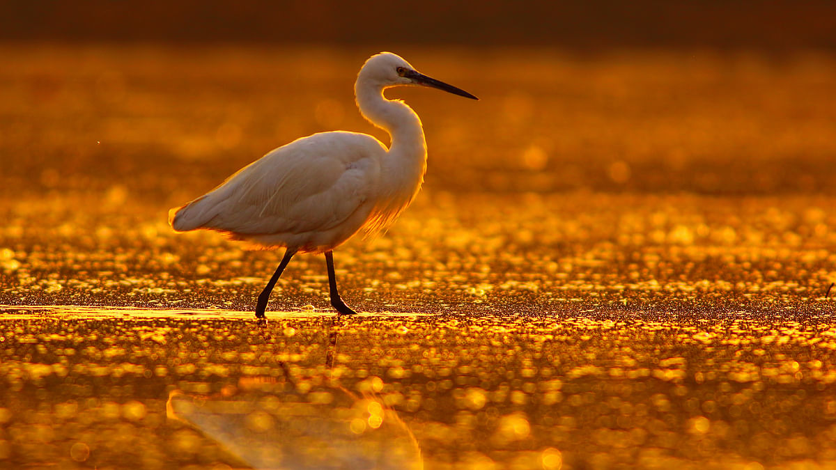 Upcoming regulations could weaken existing protection for wetlands. (Photo: iStock)