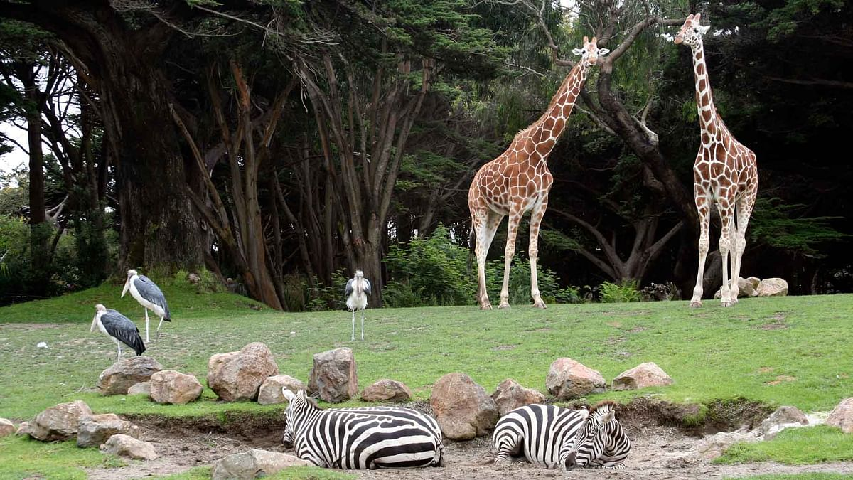 Animals in the San Francisco Zoo (Photo Courtesy: iStock images)