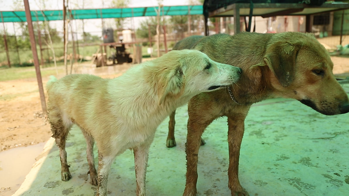 After her recovery, Summer has nicely integrated with other animals in Umeed and has also made some friends. (Photo: <b>The Quint</b>)