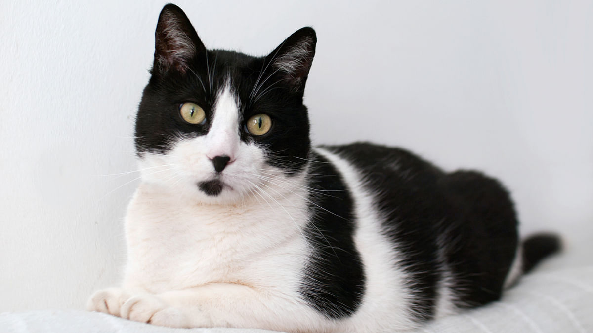 UK's Foreign Office Cat Accused of Being an European Union Spy