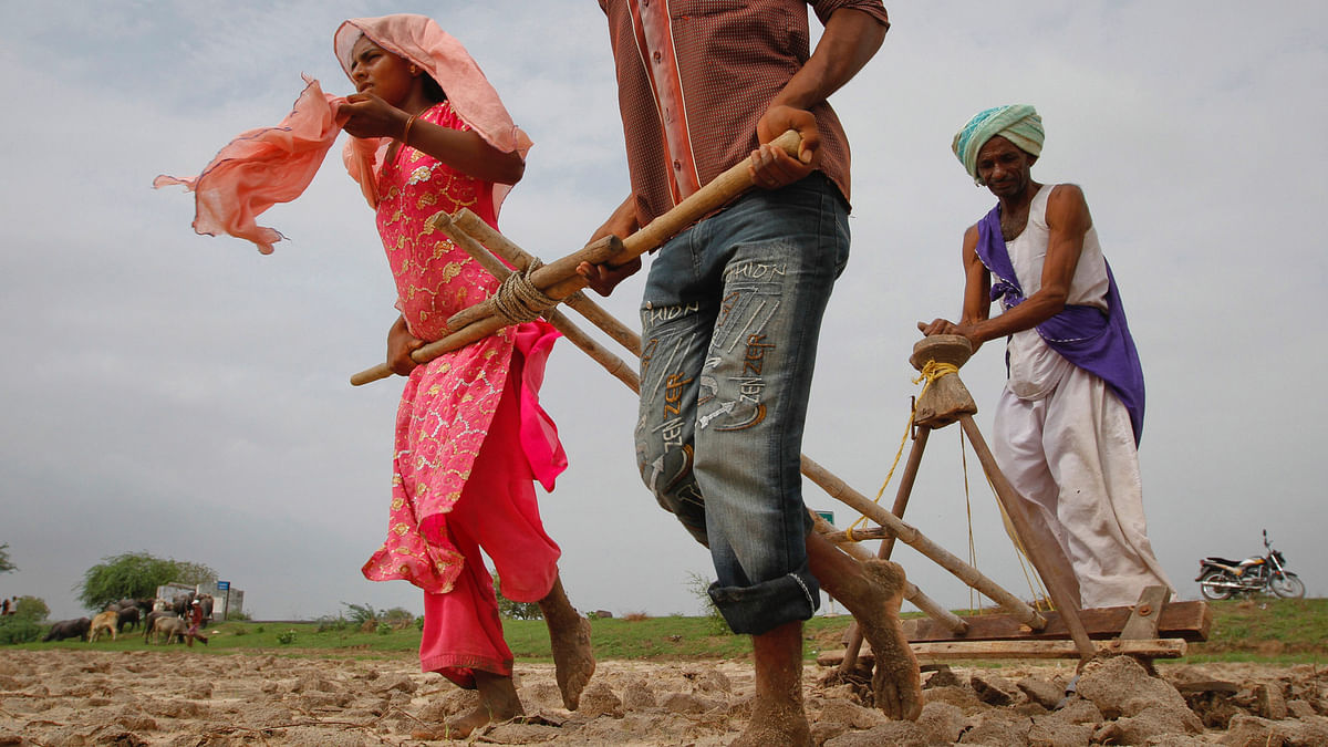 Farmers sowing cotton seeds. (File photo: Reuters)
