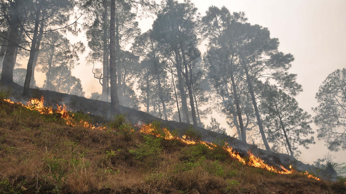 A fire that broke out in forests near Rudraprayag of Uttarakhand on 30 April 2016. (Photo: IANS)