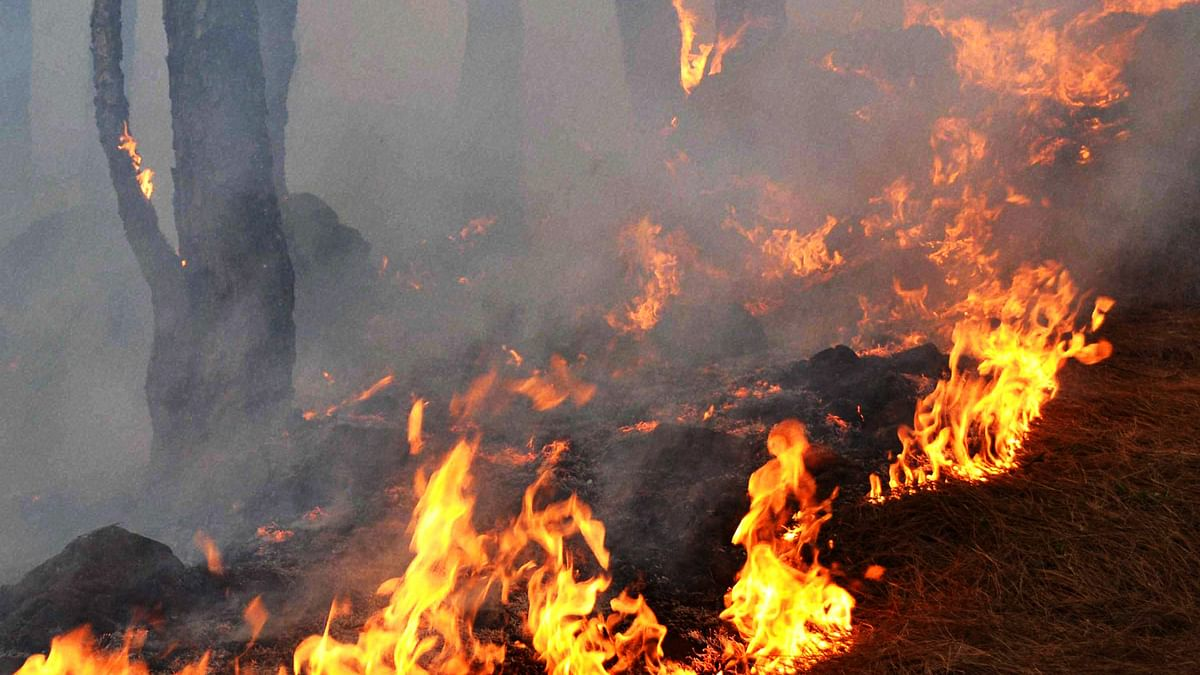 A massive fire broke out in forest areas of Bathuni and Gambr of the Rajouri forest division in Jammu and Kashmir on Sunday. (Photo:PTI)
