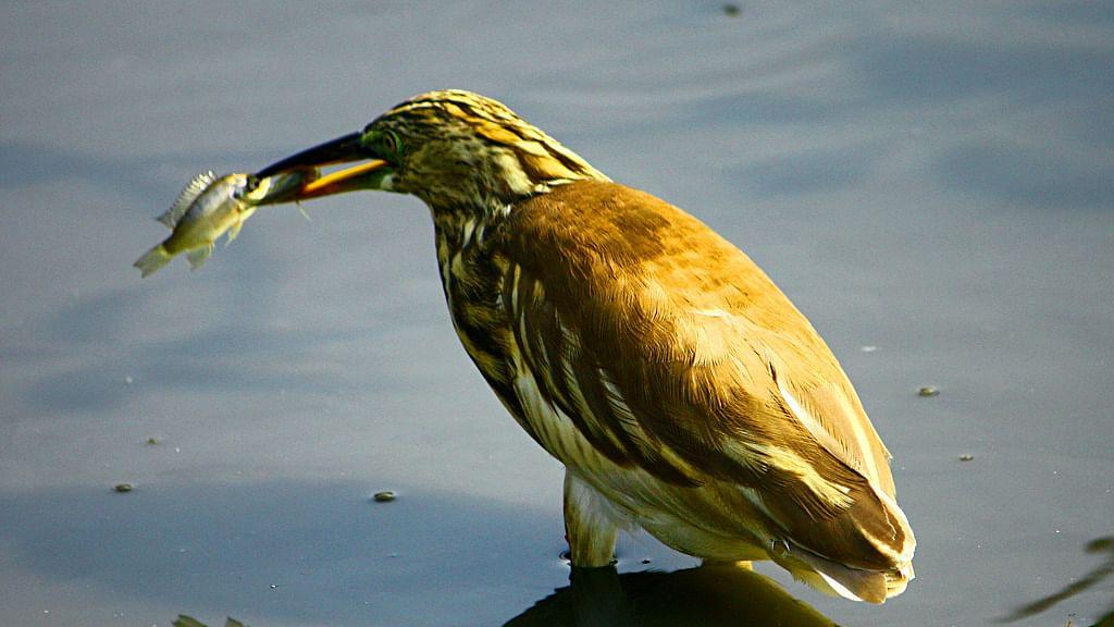 "Hundreds of thousands of species rely on wetlands. (Photo Courtesy: Flickr/<a href=""https://www.flickr.com/photos/srkkiran/"">Kiran SRK</a>)"