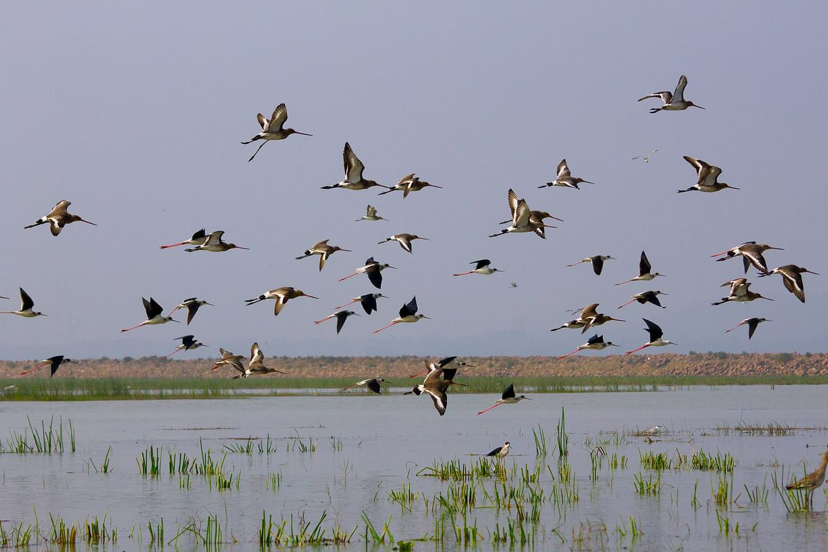 Fewer wetlands are protected under the new regulations. (Photo Courtesy: Flickr/Supratik Sircar)