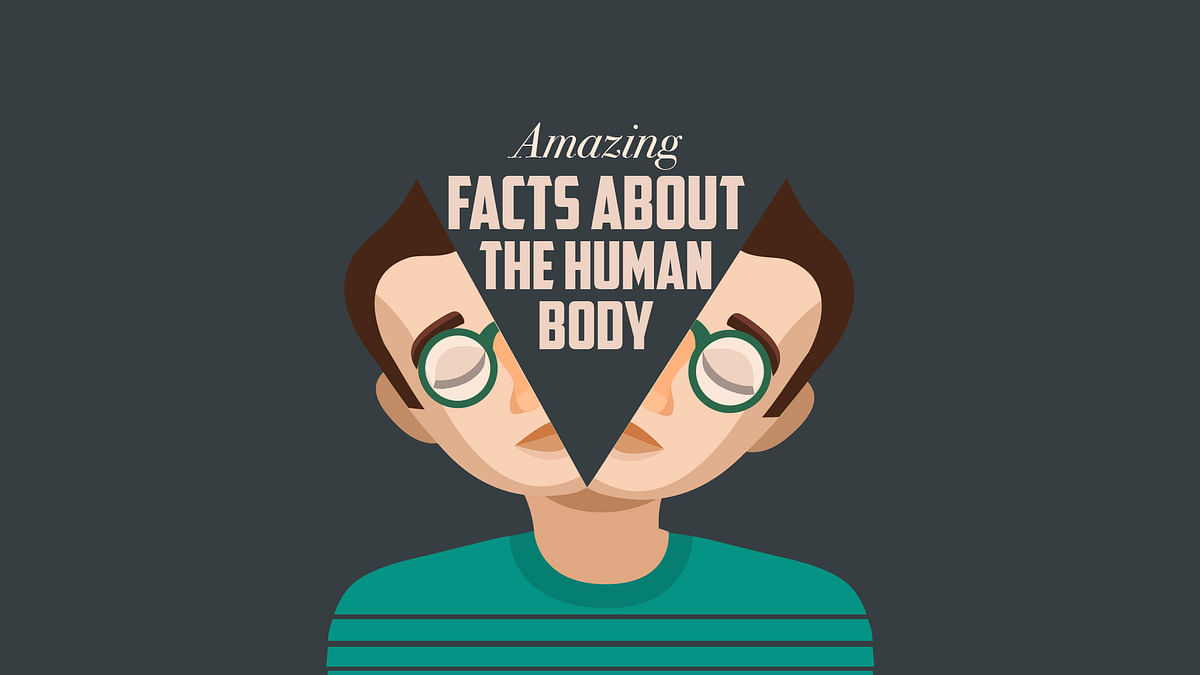 If you dive inside the human body, you'll swim across several fascinating organs. And believe us, some of them are indeed, pretty fascinating!