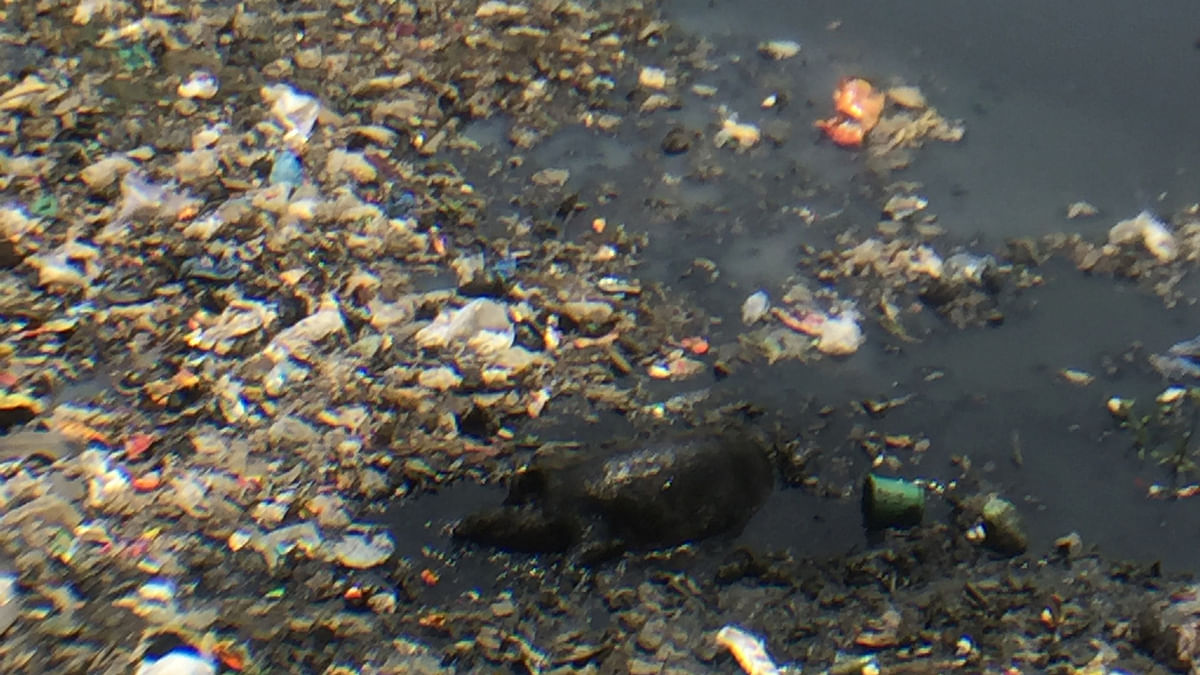 A pig revels in the muck-filled heaven that is the Mithi rover today, as it flows 17.8 kilometres through Mumbai before finally flowing out into the Arabian Sea. (Photo: <b>The Quint</b>/Pallavi Prasad)  &nbsp;