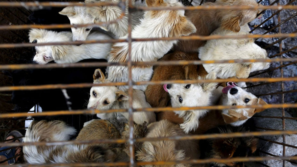 """China's Dog Meat Festival Banned, But Restaurants Say """"What Ban?"""""""