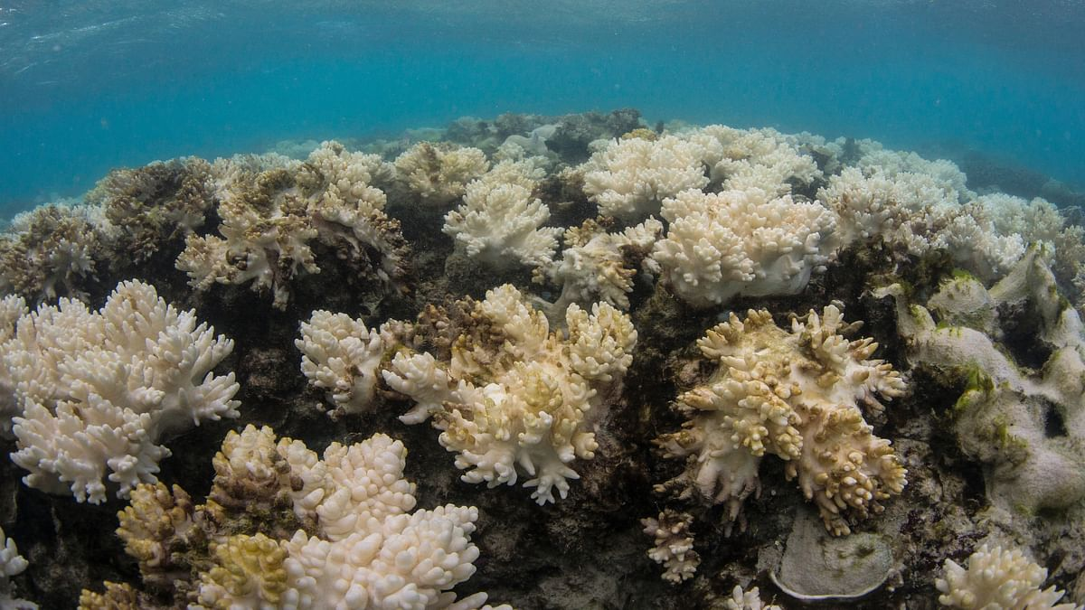 """Decomposing corals at Lizard Island, Great Barrier Reef. (Photo Courtesy:<a href=""""http://www.globalcoralbleaching.org/#essential-facts""""> XL Catlin Seaview Survey</a>)"""
