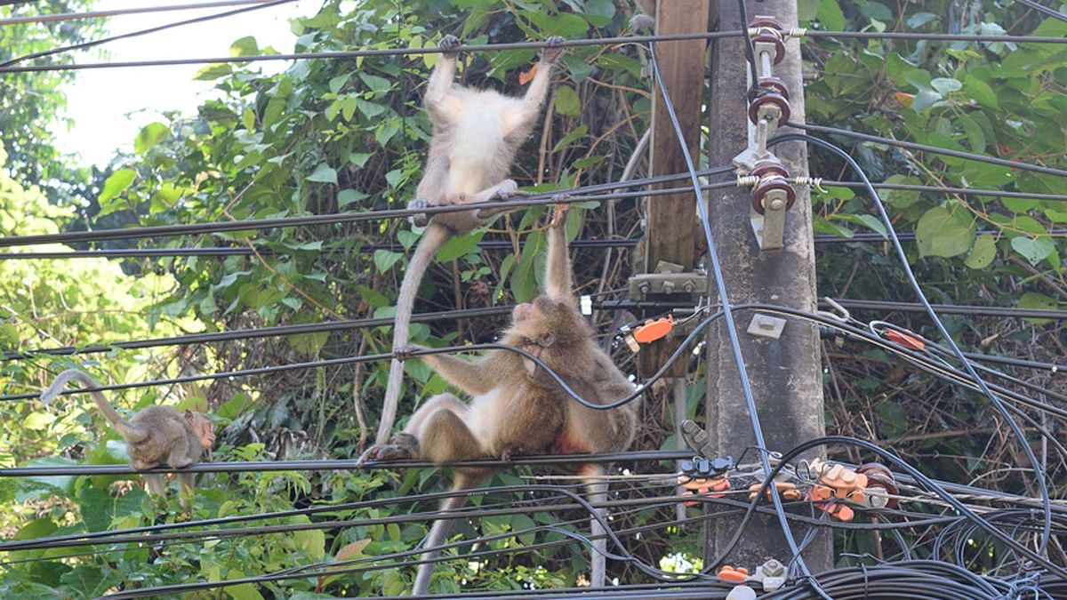 A monkey tripped a transformer over at Kenya's biggest power producer, Kenya Generating Company. (Photo: iStockphoto)