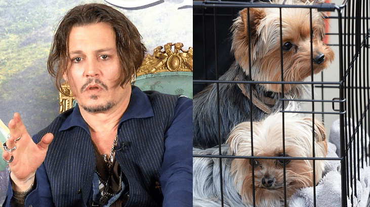 Pistol and Boo are a major point of conflict between Depp and Heard (Photo Courtesy: Twitter)