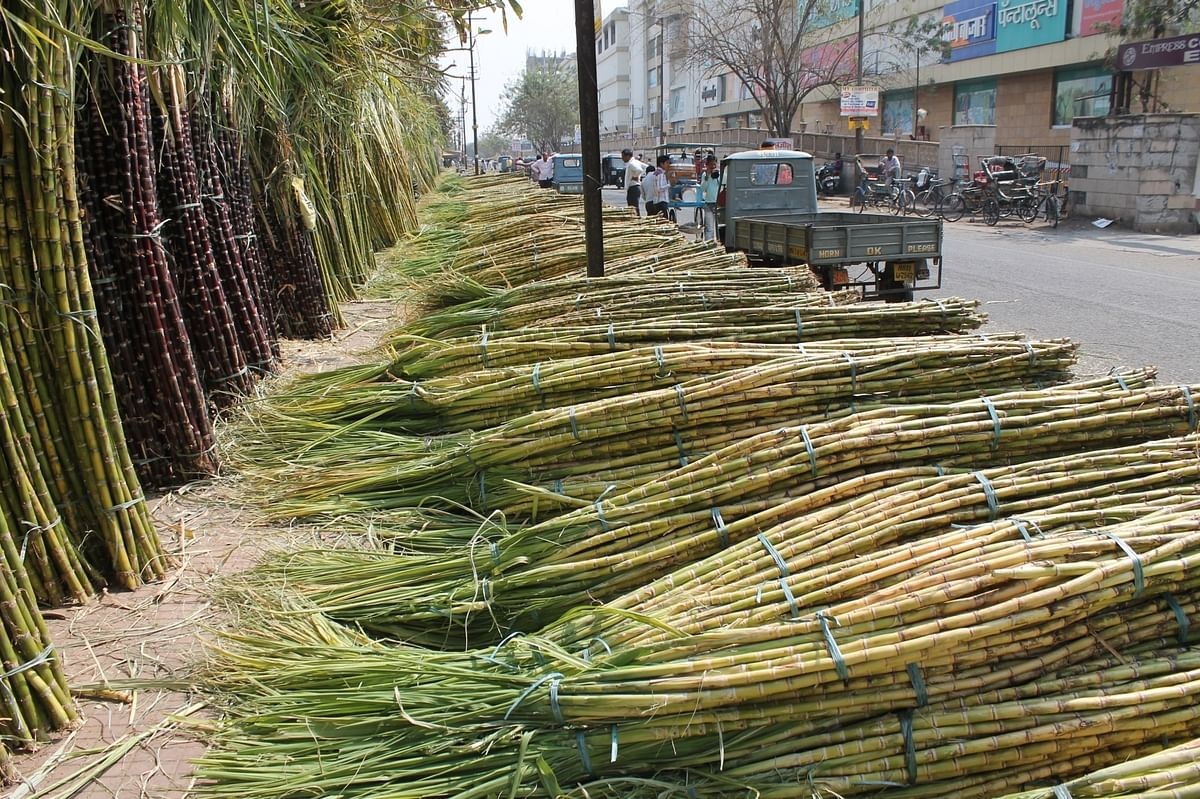 As of 2 August, sugar mills owed Rs 5,695 crore dues to cane growers. (Photo: IANS)