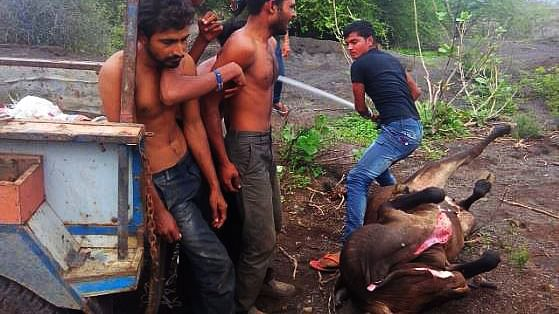 Members of the dalit community were thrashed for skinning dead cows in Una in 2016.