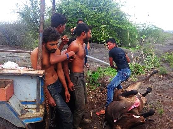 """Dalit skinners were thrashed by a cow vigilante at Una in Gujarat. (Photo courtesy: twitter,com/<a href=""""https://twitter.com/search?f=images&amp;vertical=default&amp;q=cow%20dalit%20una&amp;src=typd"""">@VijaysinhpTOI</a>)"""