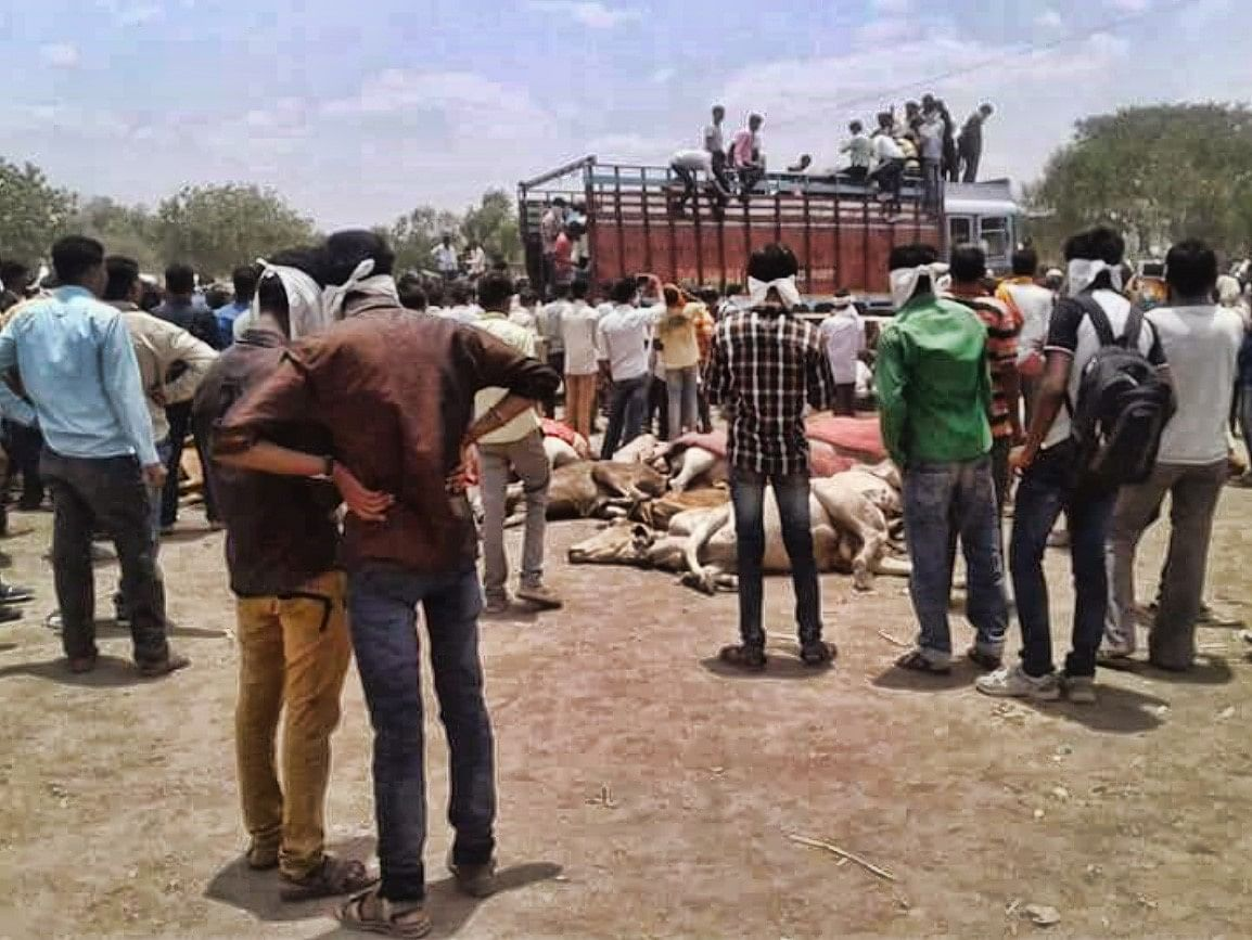 Carcasses of cows in Mewat.