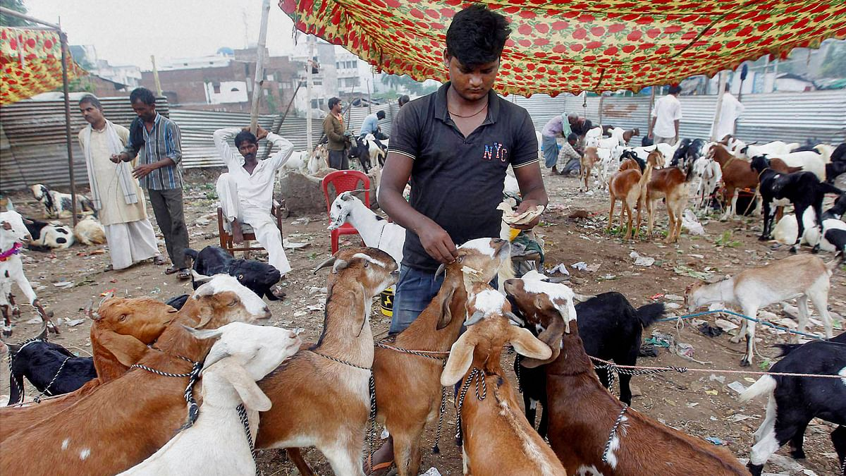 Sale of Goats Falls Significantly This Eid-Ul-Adha Due to COVID-19