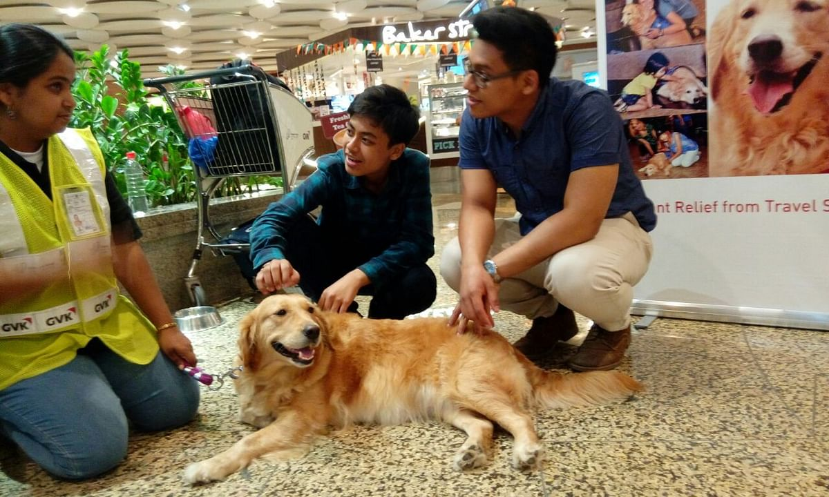 """Those who have spent time with the trio at the airport are all praise for their behaviour.&nbsp;(Photo Courtesy: Animal Angels Foundation/<a href=""""http://www.animalangels.org.in/"""">www.animalangels.org.in</a>)"""