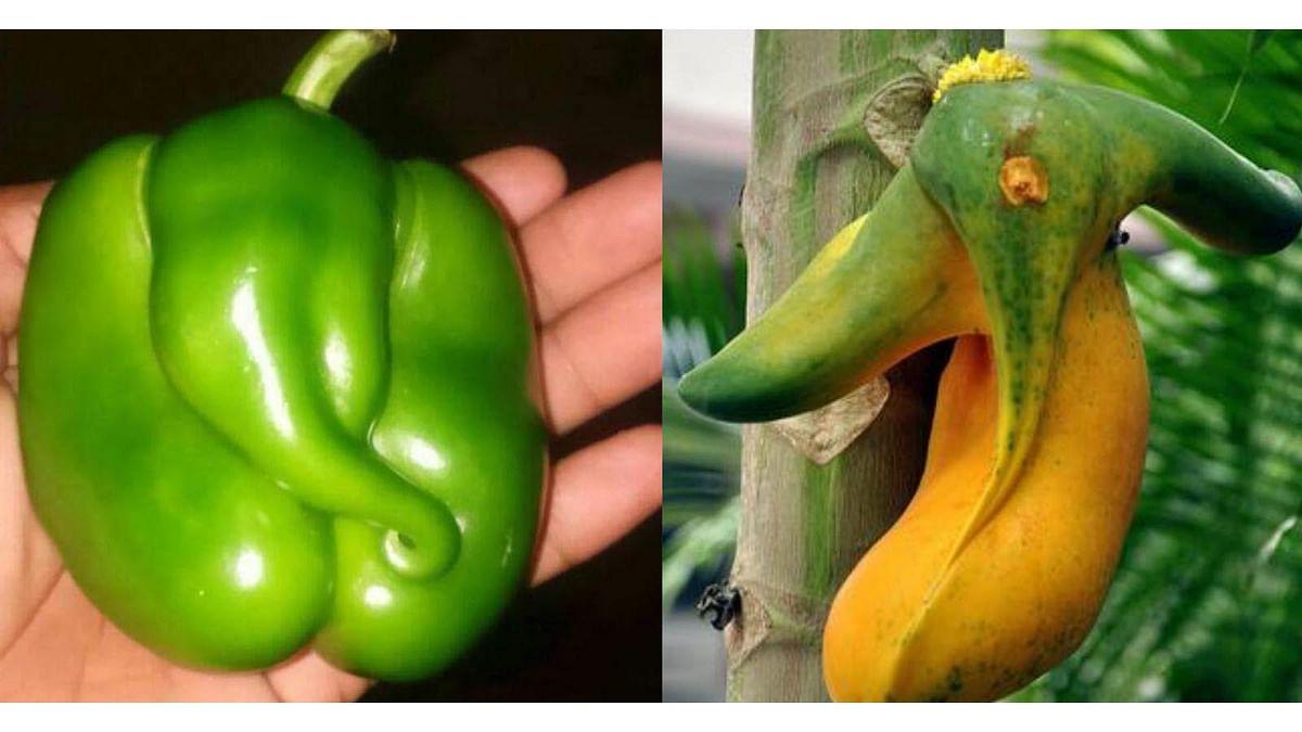 Ganesha in a capsicum and a papaya.