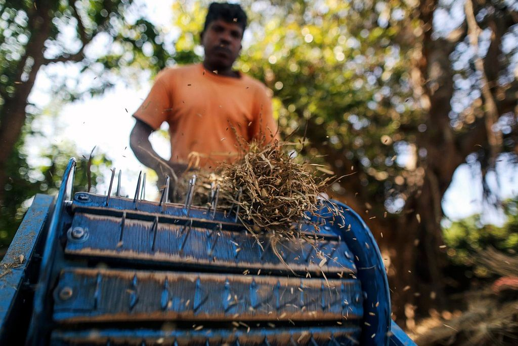 A farm worker removes rice grain from the stalk using a threshing machine in Kainad, Maharashtra, India. (Photographer: Dhiraj Singh/Bloomberg)