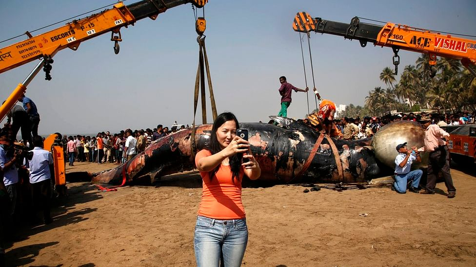 A woman takes a selfie in front of a dead whale on Juhu beach. (Photo: AP)