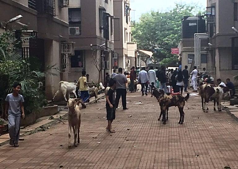 Goats roaming freely inside the housing society in Kurla, Mumbai. (Photo Courtesy: Antonette Pinto)