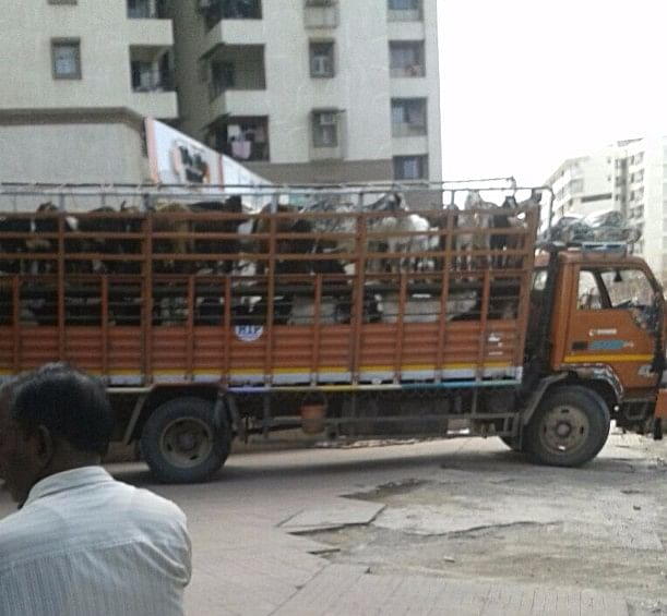 Goats from outside being brought in Premier Housing Society (Kurla) for butchering. (Photo courtesy: Antonette Pinto)