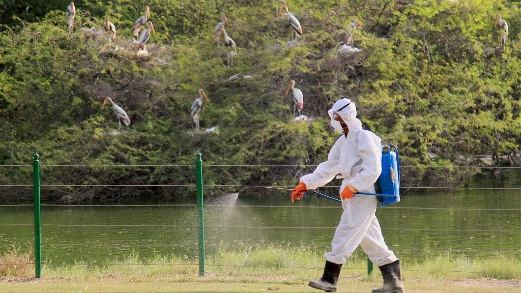 Bird Flu in India: What Is Avian Virus? Can It Infect Humans?