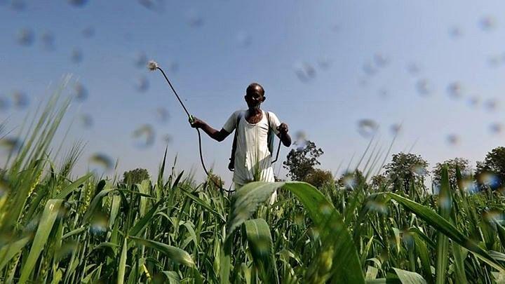 Next Govt Should Abolish MSP in 3 Years: Surjit Bhalla
