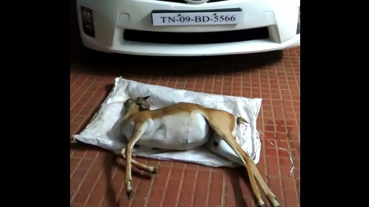 A young male blackbuck was mowed down in Chennai near the Guindy National Park on Saturday. (Photo: The News Minute)