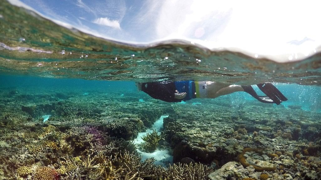 Biggest  Coral Die-Off Recorded on Australia's Great Barrier Reef
