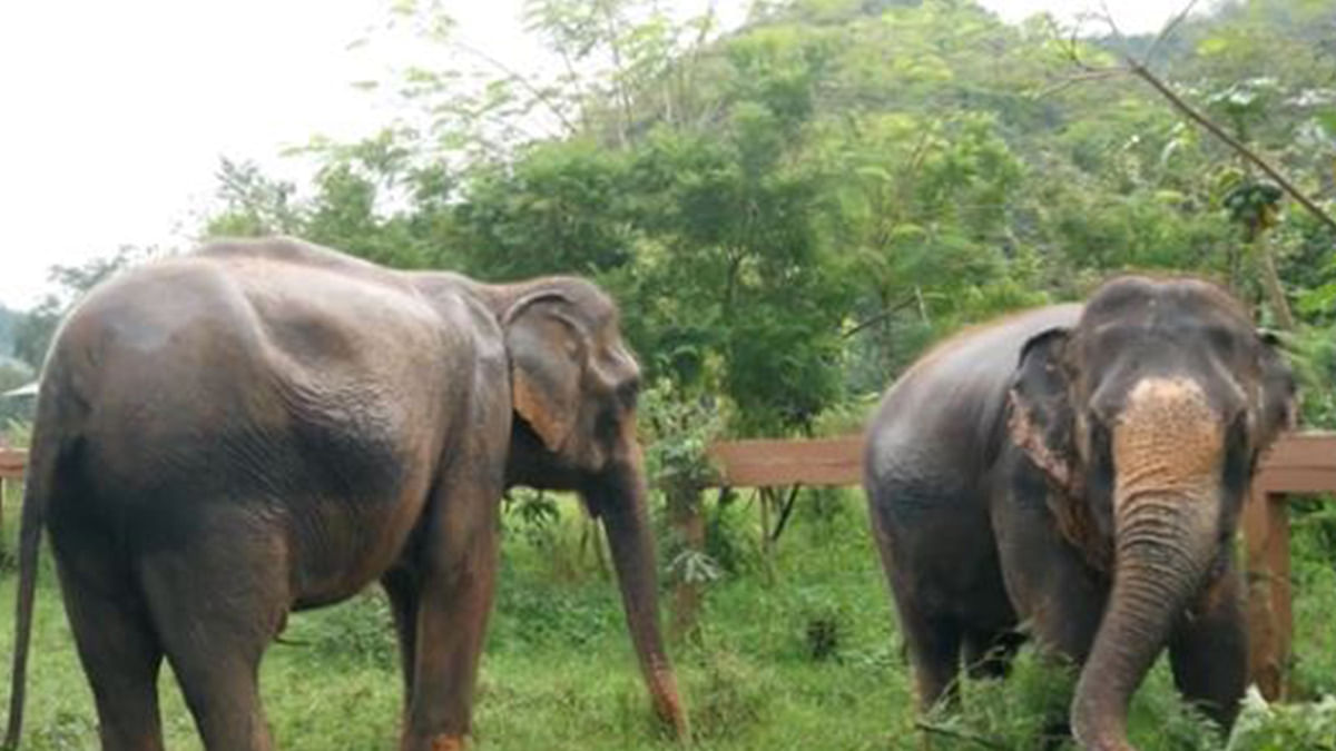 Five Elephants Run Over and Killed by Train in Assam