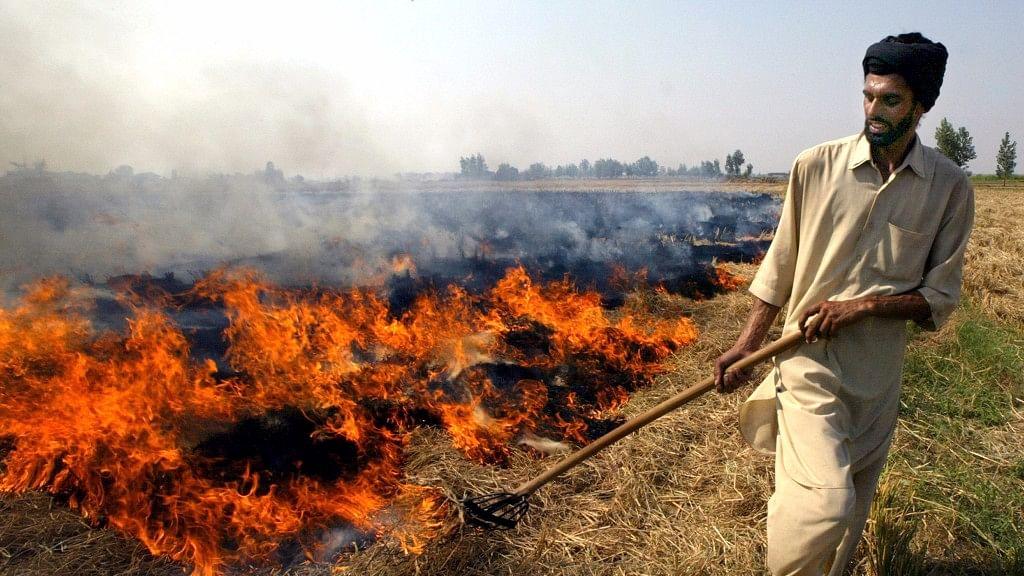 An Indian farmer burns paddy husks after a harvest near Chandigarh.