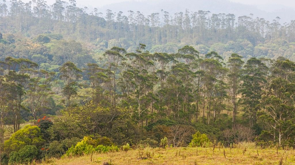 More than one-fifth of India's population was expected to benefit from the 2006 Forest Rights Act but nothing has happened so far. Photo used for representational purposes: (Photo: iStock)