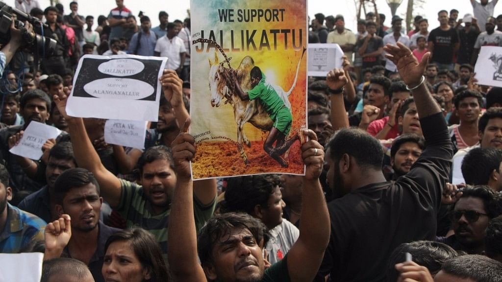 People in large numbers stage a protest against the arrest of those who have demonstrated in favour of Jallikattu in Chennai on 17 January, 2017. (Photo: IANS)