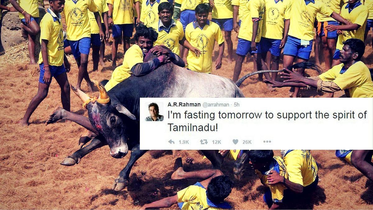 Jallikattu is a popular sport in many districts in Tamil Nadu. (Photo: PTI)