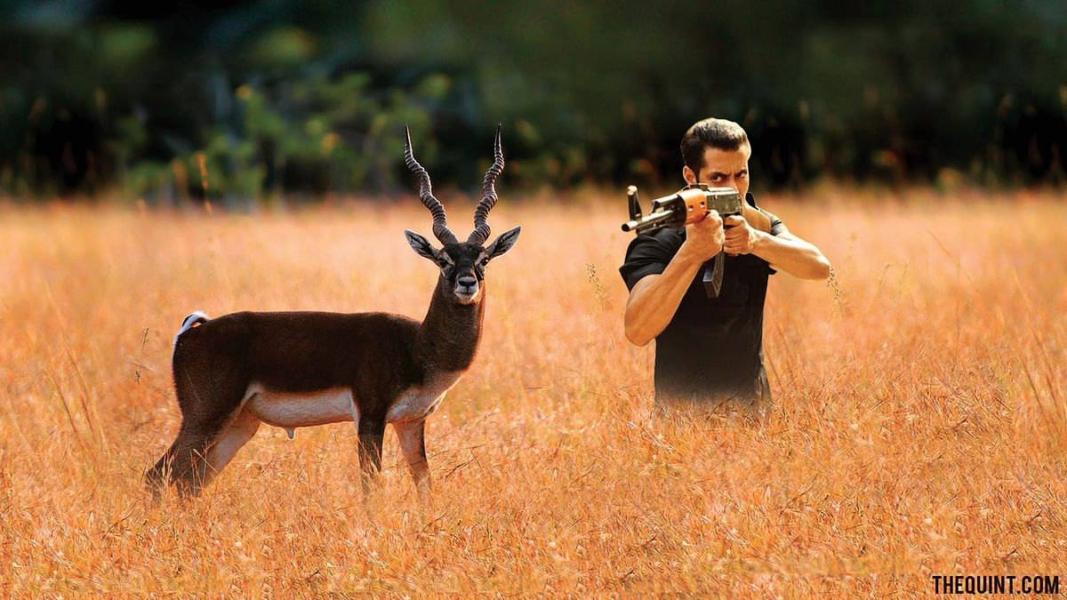 Ek Tha Poacher: A Handy Guide to Salman Khan's Blackbuck Case