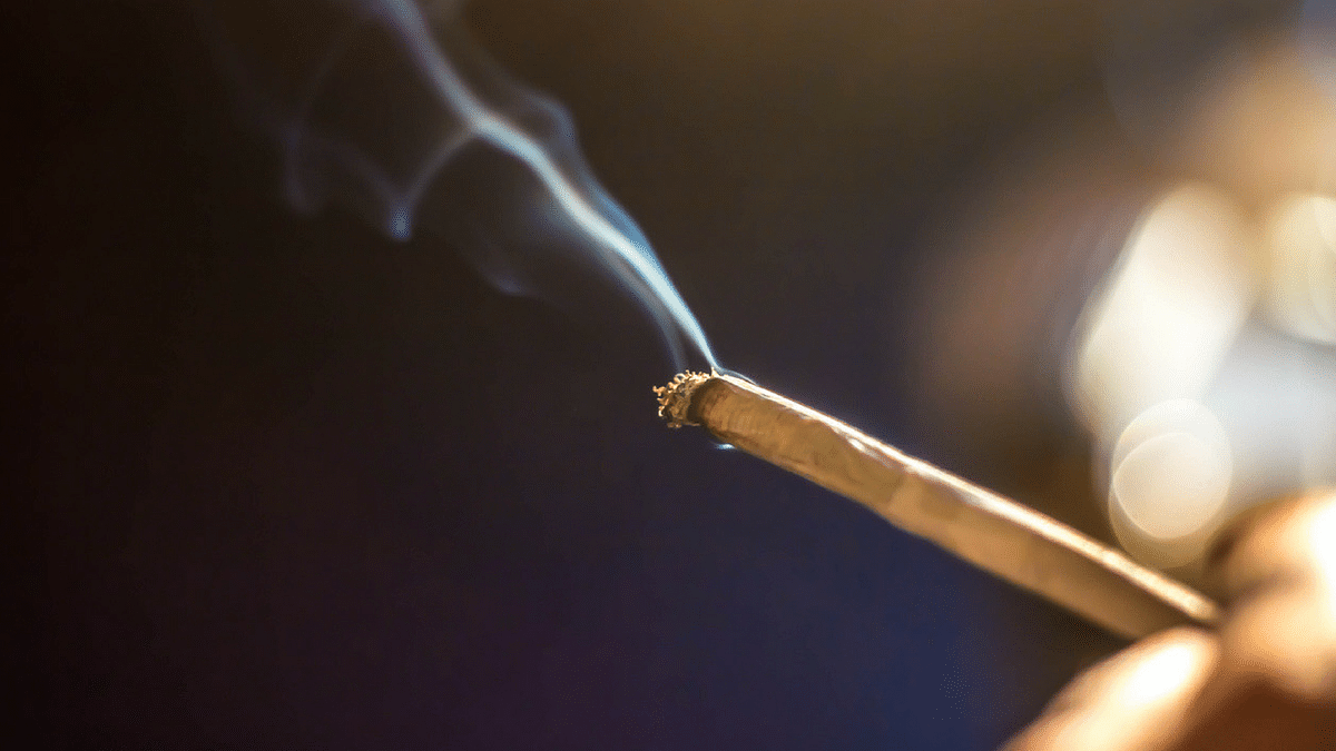 Medical cannabis may help with nausea and vomiting in those seeking chemotherapy.