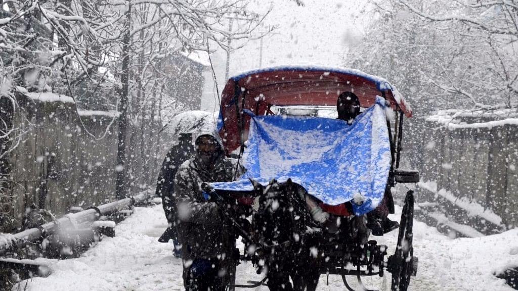 Snowfall Shuts Jammu Srinagar Highway, Cattle Trucks Stranded