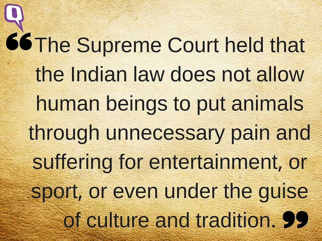 Defending Jallikattu in the Name of Tradition Is Like Backing Sati
