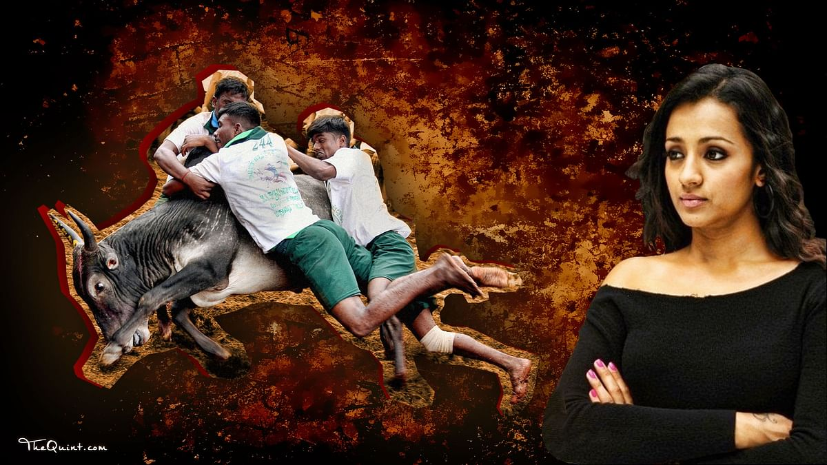 Trisha lashed out at those who targeted and threatened her for allegedly opposing Jallikattu. (Photo: Lijumol Joseph/ <b>The Quint</b>)