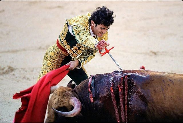 """A matador reining in a bull in Spain's bullfighting sport. (Photo courtesy:<a href=""""https://twitter.com/search?q=Spain%20Bull%20Fight&amp;src=typd""""> Twitter)</a>"""