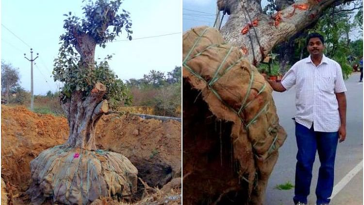 """Ramachandra says that, so far, his company has translocated around 5,000 trees from 90 different species.. (Photo Courtesy: <a href=""""http://www.thenewsminute.com/article/dont-cut-trees-just-move-them-instead-hyderabad-man-shows-you-how-57746"""">TheNewsMinute</a>)"""