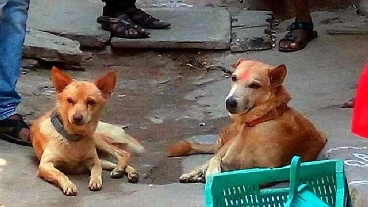 This is not the first time that stray dogs have come to the rescue of people. (Photo Courtesy: The News Minute)